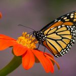 Butterfly Symbolism in Tarot