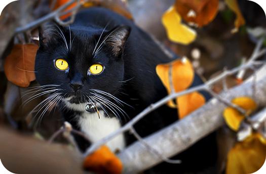 Cat Symbolism In Tarot