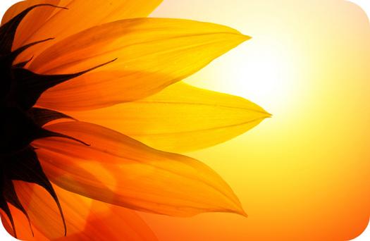 Flower Meaning In Tarot